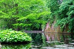 Jardin Botanique Floralpina d'Arras