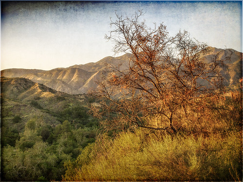 california park tree landscape unitedstates challenge regional oneill ranchosantamargarita