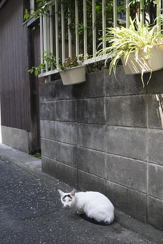 JA C5 15 015 福岡市中央区渡辺通 α7 MDR35 2.8U#