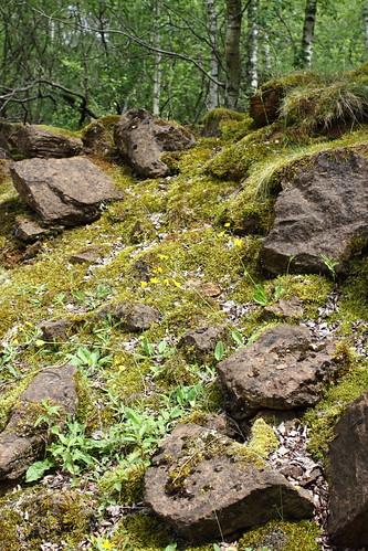 "Nature reserve ""Haard, Hesselbierg, Staebierg"""