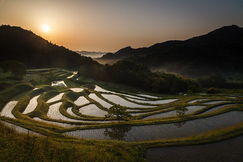 morning japan sunrise rice chiba 日本 riceterrace 千葉県 鴨川市
