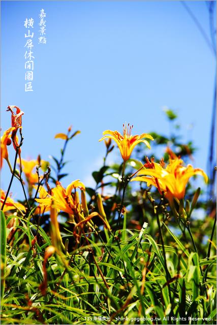 【2014金針花季】2014賞金針花海【2014金針花季】2014賞金針花海