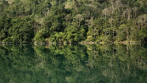 翡翠水庫食蛇龜棲地。(圖片來源:林務局)