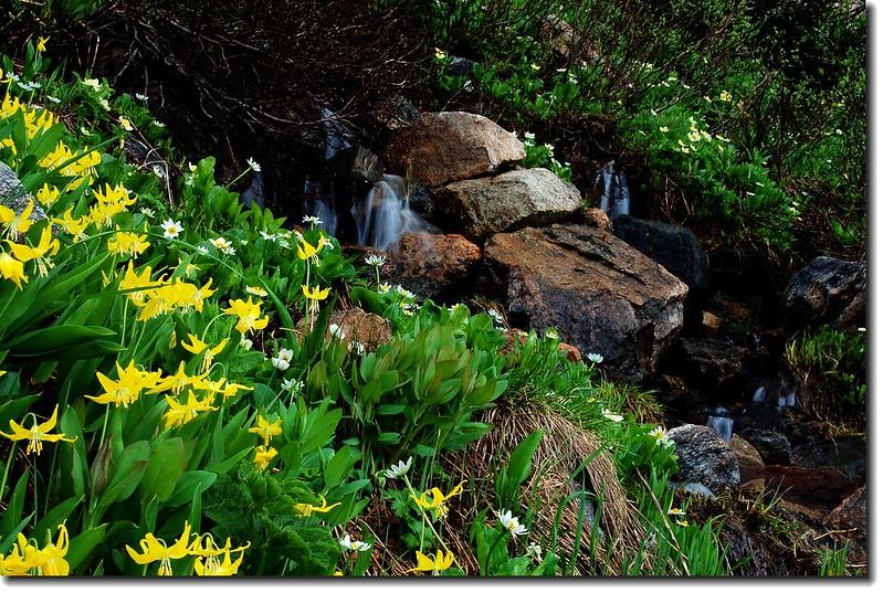 Wildflowers and Waterfall 1