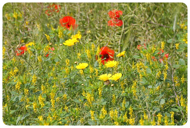 malta flowers
