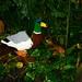 Missouri Botanical Garden Legos 2014 088