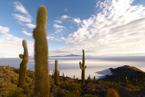 travel blue shadow cactus sky cloud white mountain southamerica nature rock landscape island view desert salt bolivia saltlake altiplano salardeuyuni incahuasi thankslife incahuasiisland clicheforu christianpetit spikeysaltylandscape