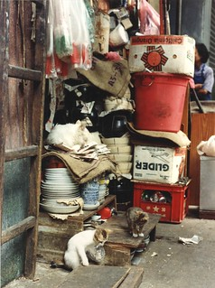 One paw in a plastic bag, two kittens playing on the street observed by their furry white mama cat sleeping on papers, plates and bowls, cooking pots, store, California oranges box, Kowloon, Hong Kong, 1990