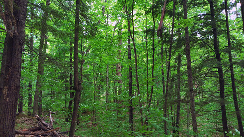 Marinette County Beech Forest State Natural Area