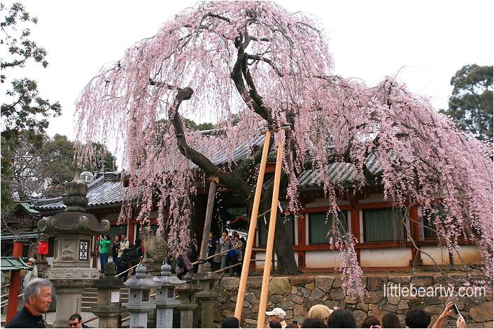 奈良公園-17