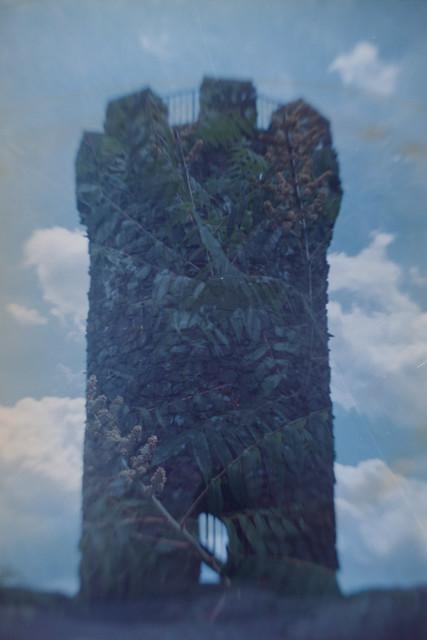 Castle/Fern