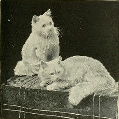 "Image from page 142 of ""The Angora cat; how to breed train and keep it;"" (1898)"