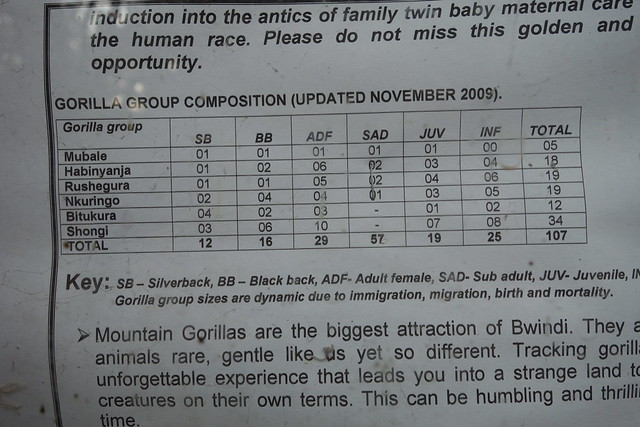 140625 Gorilla Info