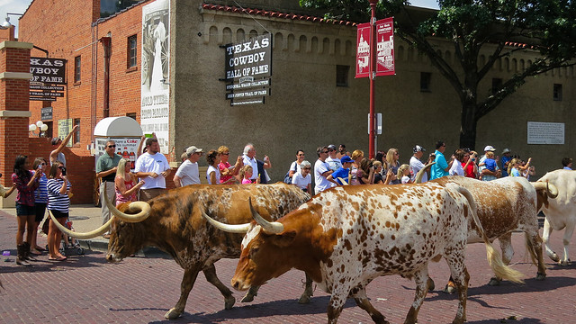 Longhorn cattle drive @ Fort Worth Stockyards by CC user apbutterfield on Flickr