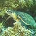 Chole Bay Snorkelling trip