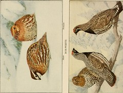 "Image from page 153 of ""The book of birds, common birds of town and country and American game birds"" (1918)"