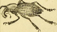 """Image from page 854 of """"Unterhaltungen in der Naturgeschichte aller Arten Insekten : zum nützlichen Gebrauch für die Jugend : aus verschiedenen Schriften berühmter Naturforscher zusammengetragen, mehrentheils aber aus eignen Beobachtungen und Erfahrungen"""