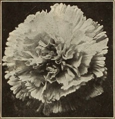"Image from page 131 of ""Dreer's garden book 1915"" (1915)"