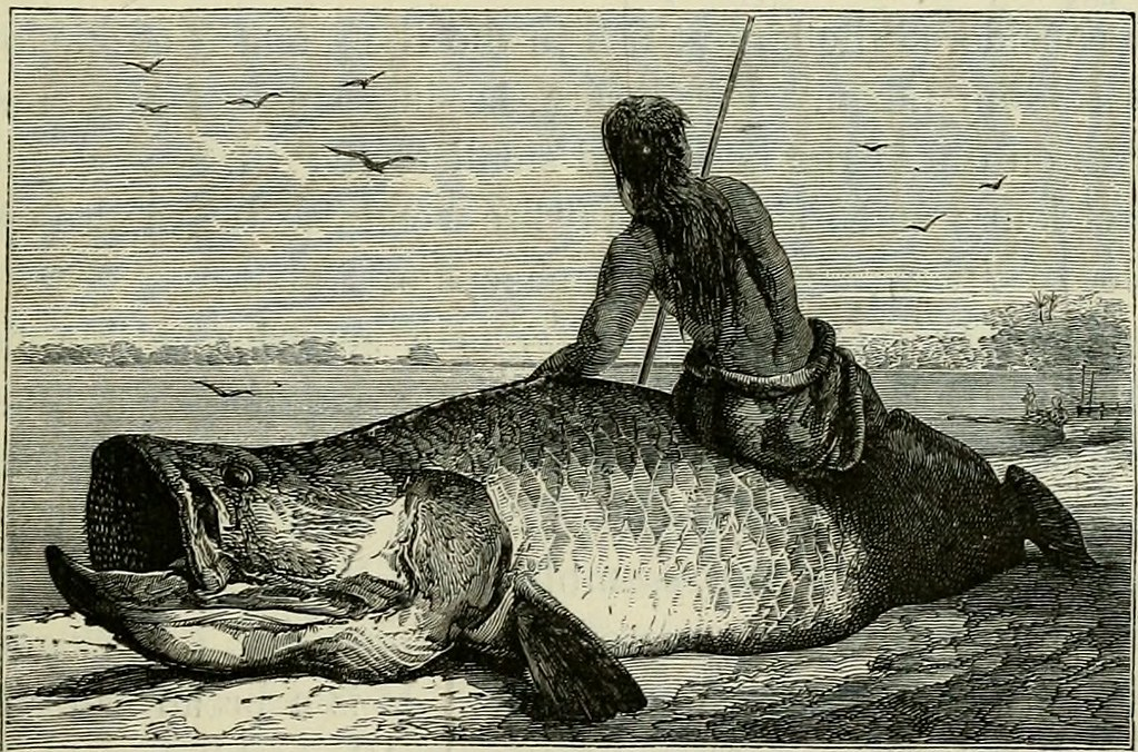 "Image from page 480 of ""The Andes and the Amazon :