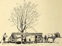 """Image from page 377 of """"Annals of horticulture in North America for the year ... : a witness of passing events and a record of progress"""" (1889)"""