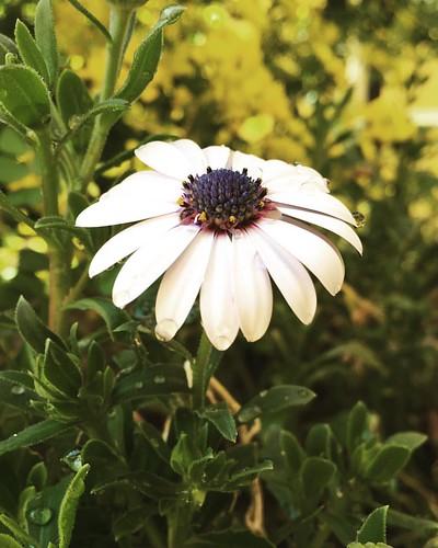 Me encanta el agua de primavera y las flores. #flores #instalove #instaflower #igers #igersciudadreal #herencia #flower #flowerlover #flowerstagram #flowerporn #photoday #photography #photographer