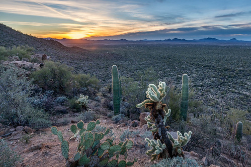 arizona carnegieagigantea cylindropuntiabigelovii opuntia pimacounty saguaro saguaronationalpark saguarowest sonorandesert tucsonmountaindistrict usa unitedstates cactus cholla desert landscape nationalpark outdoor plant pricklypear sonoran sunset teddybearcholla