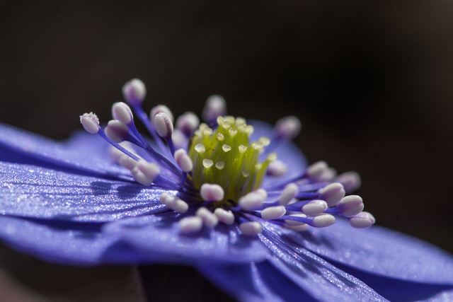 Blütenkarussell - flower corousel