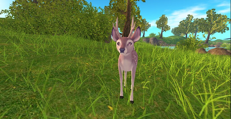 Deer of The Hill