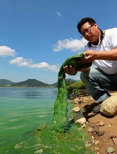 KFEM指控:四大江工程造成綠藻汙染嚴重。KFEM提供