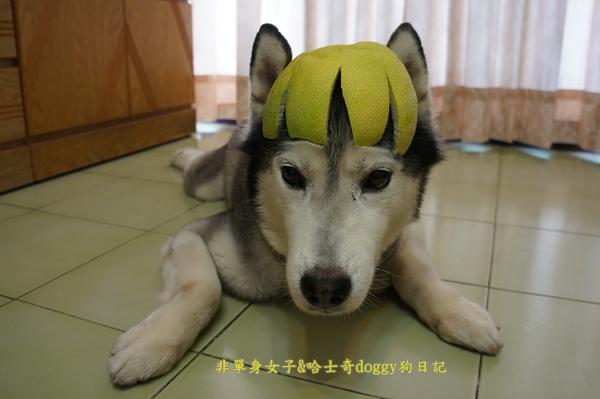 玉兔月餅柚子07