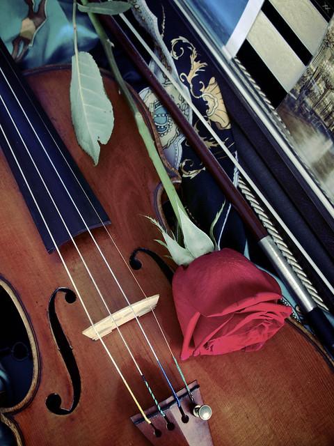薔薇とヴァイオリン Rose & Violin
