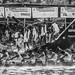 Nehru boat race Alappuzha