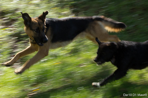 Free running dogs