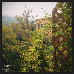#vscocam #igersitalia #igers #igersmarche #igerspiceni #natura
