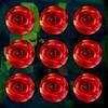 Red Rose, nine