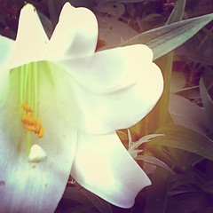 Mom had an Easter lily blooming in September!