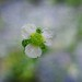 Flower floating in heaven