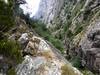 Les vestiges du chemin de débardage dans le ravin en V de la Purcaraccia