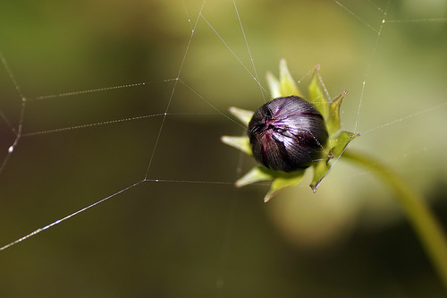 Spiders-art