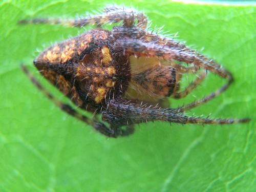 spider parqueforestallamarquesa