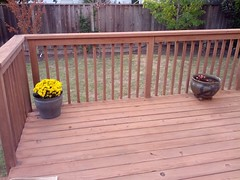 Chrysanthemums and begonias on the back deck, now