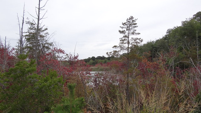 Birding birders Cape May