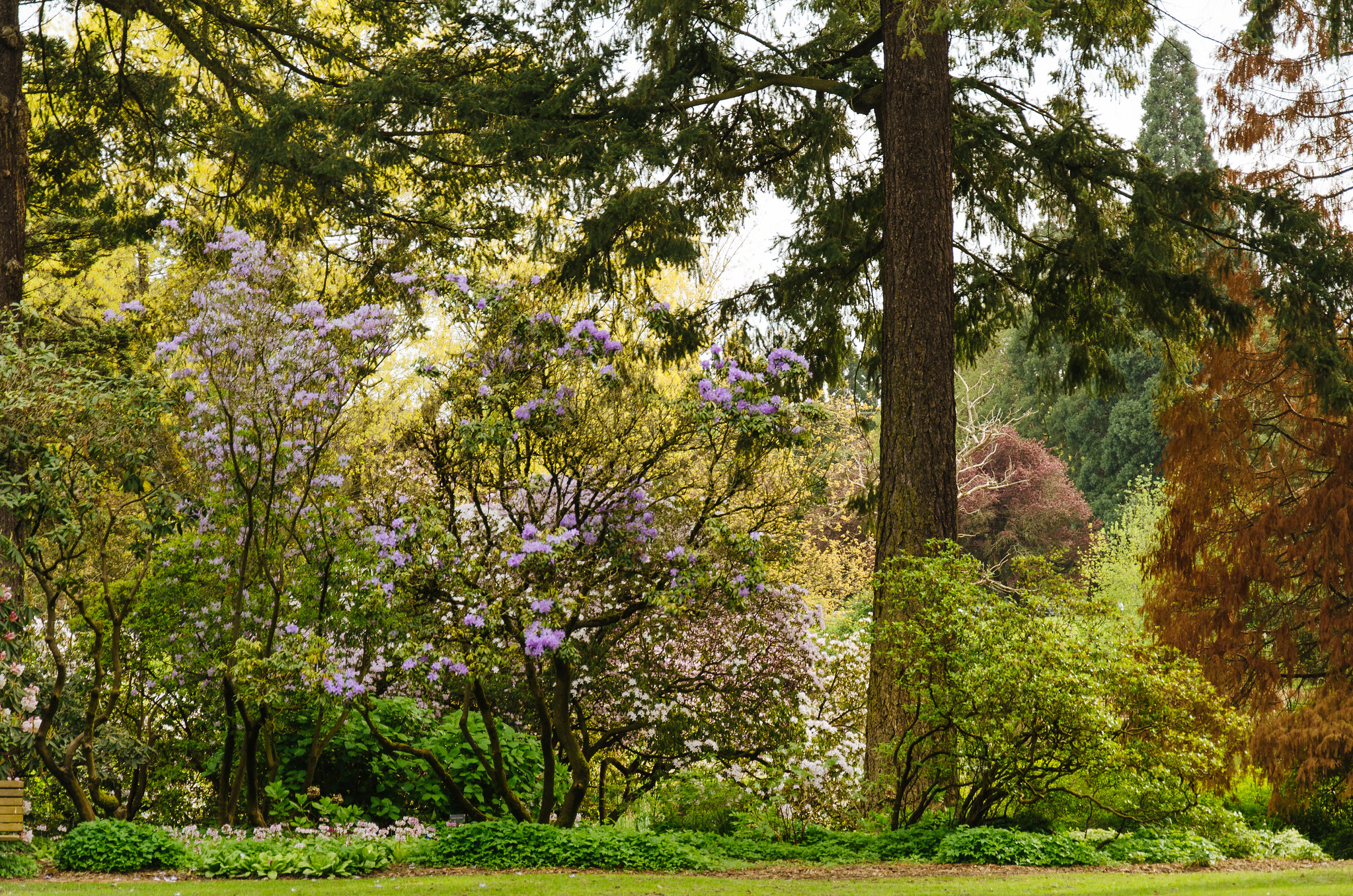 Crystal Springs Rhododendron Garden Explore Reidab 39 S Photo Flickr Photo Sharing