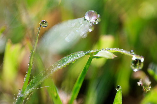macro art nature water virginia drops aqua unitedstates fineart natur drop dew droplet makro virginiabeach lipoma kunstwelt photosophie giesea lipom crowdmedia drachenfanger ilobsterit andreasmgiesea darchenfanger