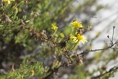 Nuove e vecchie fioriture