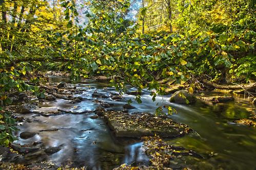 autumn trees fall leaves river stream vermont foliage brattleboro