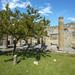 Tree in the garden ruins of Pompeii