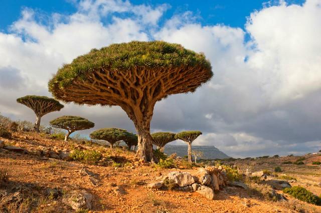 1_Socotra, Yemen.jpg