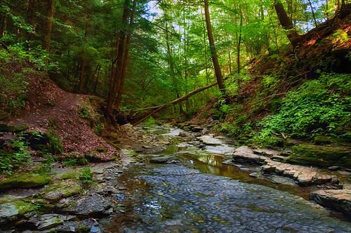 newyork nature photoshop us woods unitedstates union upstatenewyork centralnewyork newyorkstate hdr grayscreek ibmglen broomecounty nikcollection
