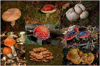 Fungi medley (39/52/2014)